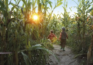 AJMMCY Two boys walking through a corn maze