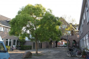 Tuinwijk